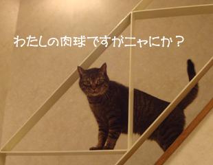 DSC044100.jpg